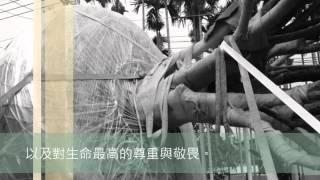 樹花園TreeGarden 南投百年桂花移植全記錄