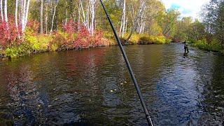 Рыбалка в Хабаровском крае Река Кривая Кенжа Хариус ленок 22 09 2021 г