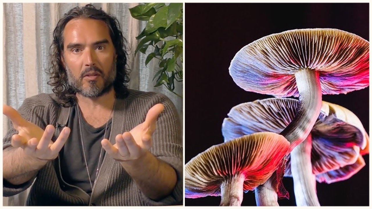 Is THIS the Real Reason Psychedelics Are Illegal?
