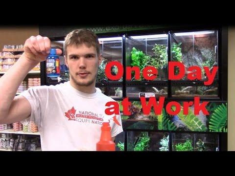 One Day at Work (Pet Circus Ottawa)