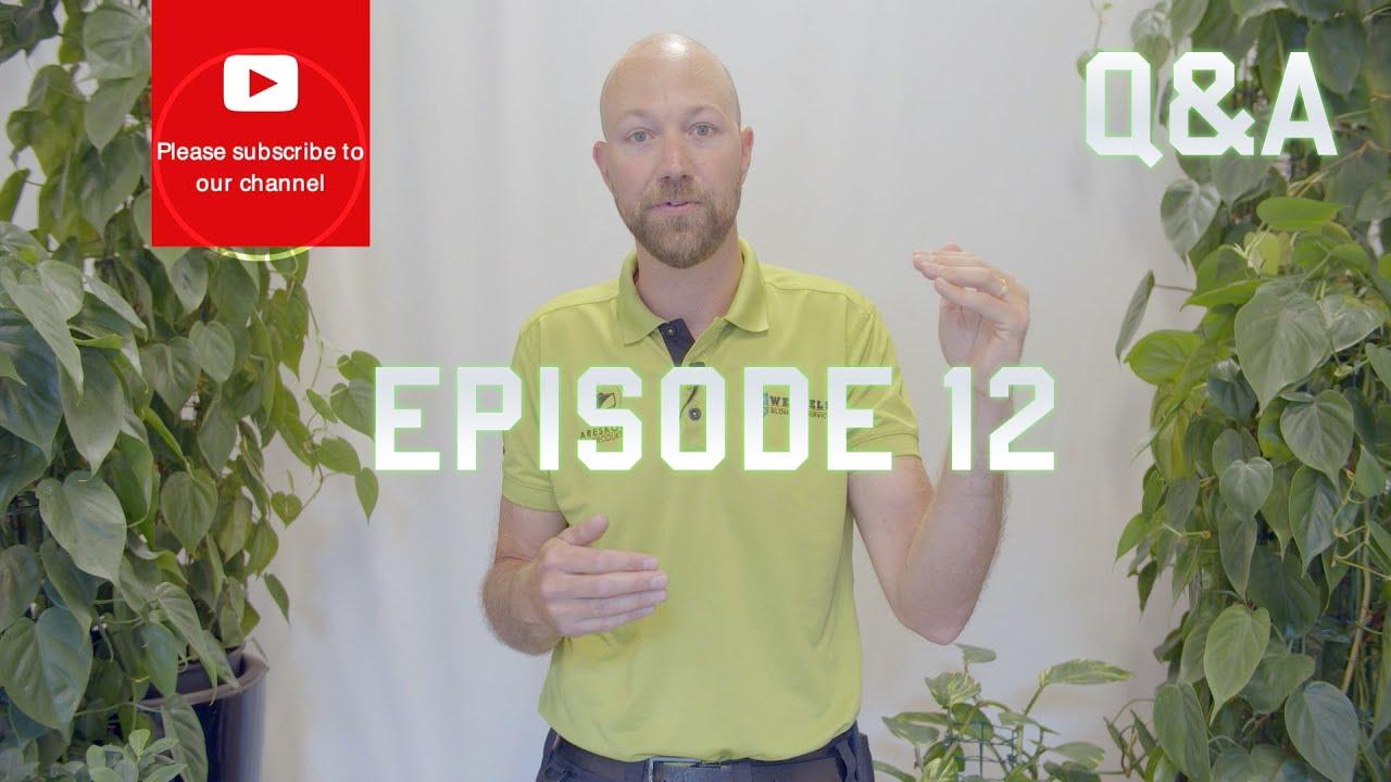 Q&A Episode 12