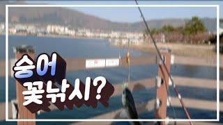 [숭어꽃낚시(봉낚시)] #진해숭어 # 요구르트병 숭어 …