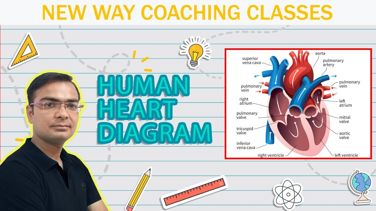 how to draw human heart diagram  [ 1280 x 720 Pixel ]
