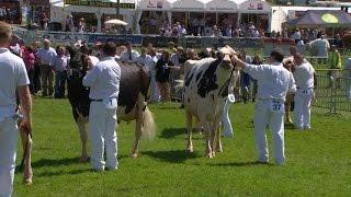 Pencampwriaeth Gwartheg Holstein | Holstein Cattle Championship