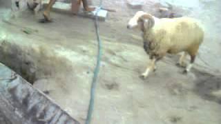 Vidéo de mon téléphone 3alouch