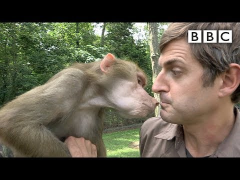 Louis Theroux meets Tatiana the baboon | America's Most Dangerous Pets - BBC