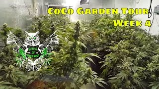 CoCo Cannabis Garden Week 4 Walkthrough | Flowering Marijuana in CoCo