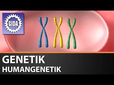 gida genetik humangenetik biologie schulfilm dvd trailer youtube. Black Bedroom Furniture Sets. Home Design Ideas