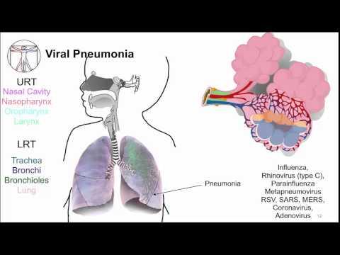 virus syncytial respiratoire bouché le nez nez qui coule