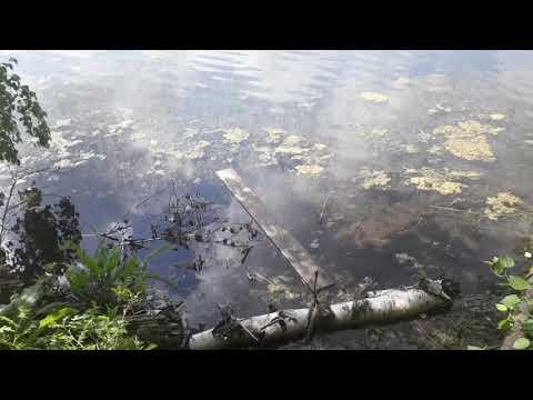 Рыбалка, озеро Киргизкуль. Красноярский край. Манский район