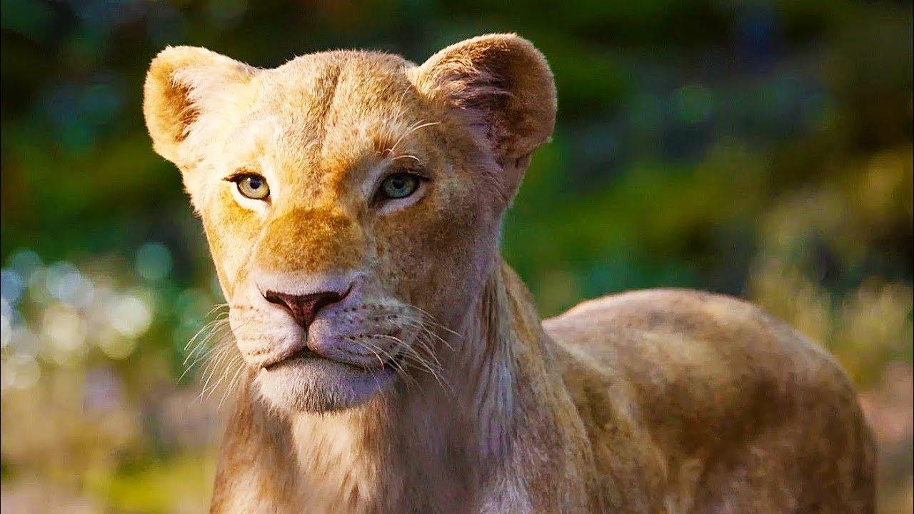 Der König Der Löwen Hör Dir Hier Den Soundtrack Des Remakes An