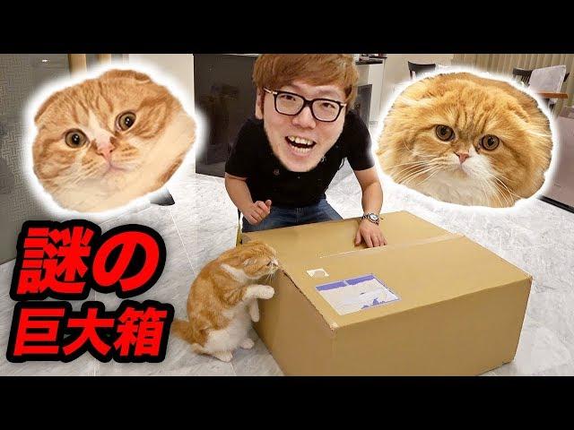 まるおともふこに謎の巨大な箱が届いたので開封するぜ!