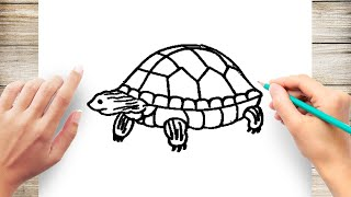 How to Draw a Green Turtle Step by Step for Kids