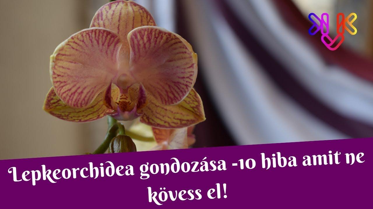 Download Orchidea gondozása   10 hiba, amit ne kövess el!