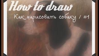●How to draw - Как нарисовать собаку / #1●(How to draw - Эта рубрика в которой собраны самые лучшие уроки по рисованию карандашом. Приятного просмотра...., 2014-06-27T13:09:16.000Z)