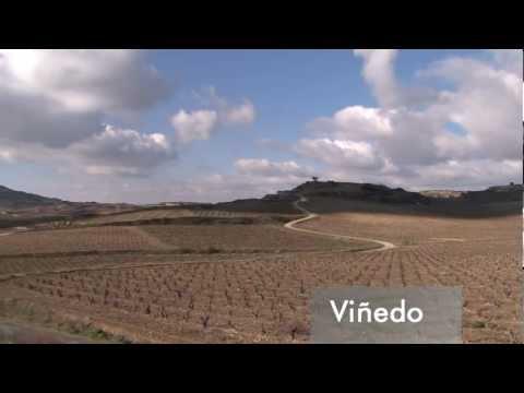 En el viñedo de Luis Cañas - Todovino.com