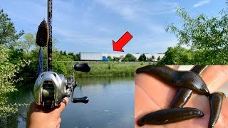 Fishing a HIDDEN Roadside Pond!!! (BIG FISH, PARASITES & LEECHES)