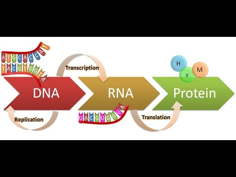 central dogma dna replication