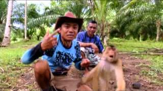 Oki Beruk Pintar Si Pemanjat Pohon Kelapa - Jejak Rimba (30/4)