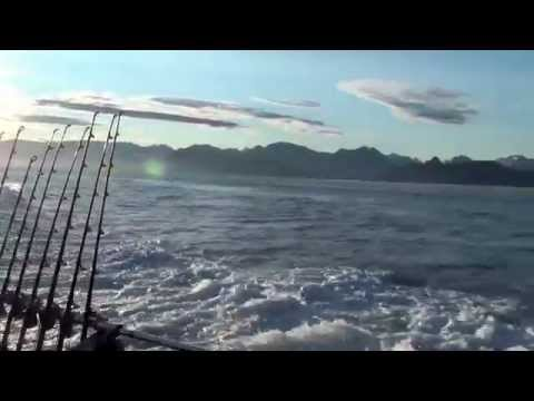 Halibut fishing homer alaska youtube for Homer alaska halibut fishing charters