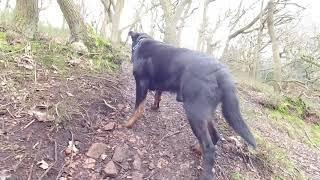 Camera dog Diesel goes walkies.