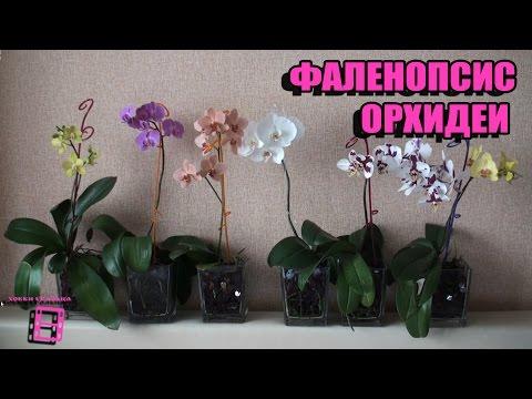 Орхидеи в России. Купить орхидеи сравнить цены товаров