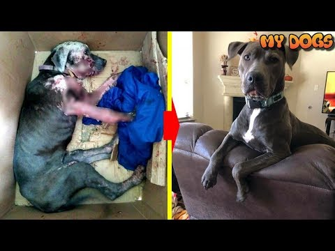 Rescue an Abandoned Dog Taped Inside Box And Thrown In Trash and Happy Ending