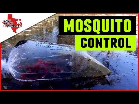 Goldfish Eating Mosquito Larvae In Swale | Organic Mosquito Control