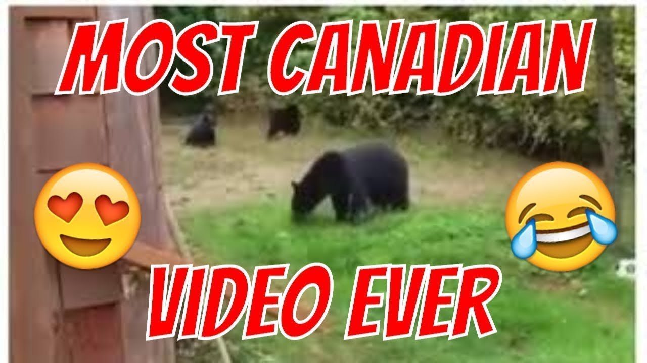 How to get rid of a bear in the garden Looking for ways 54
