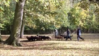 Ulane - test troupeau
