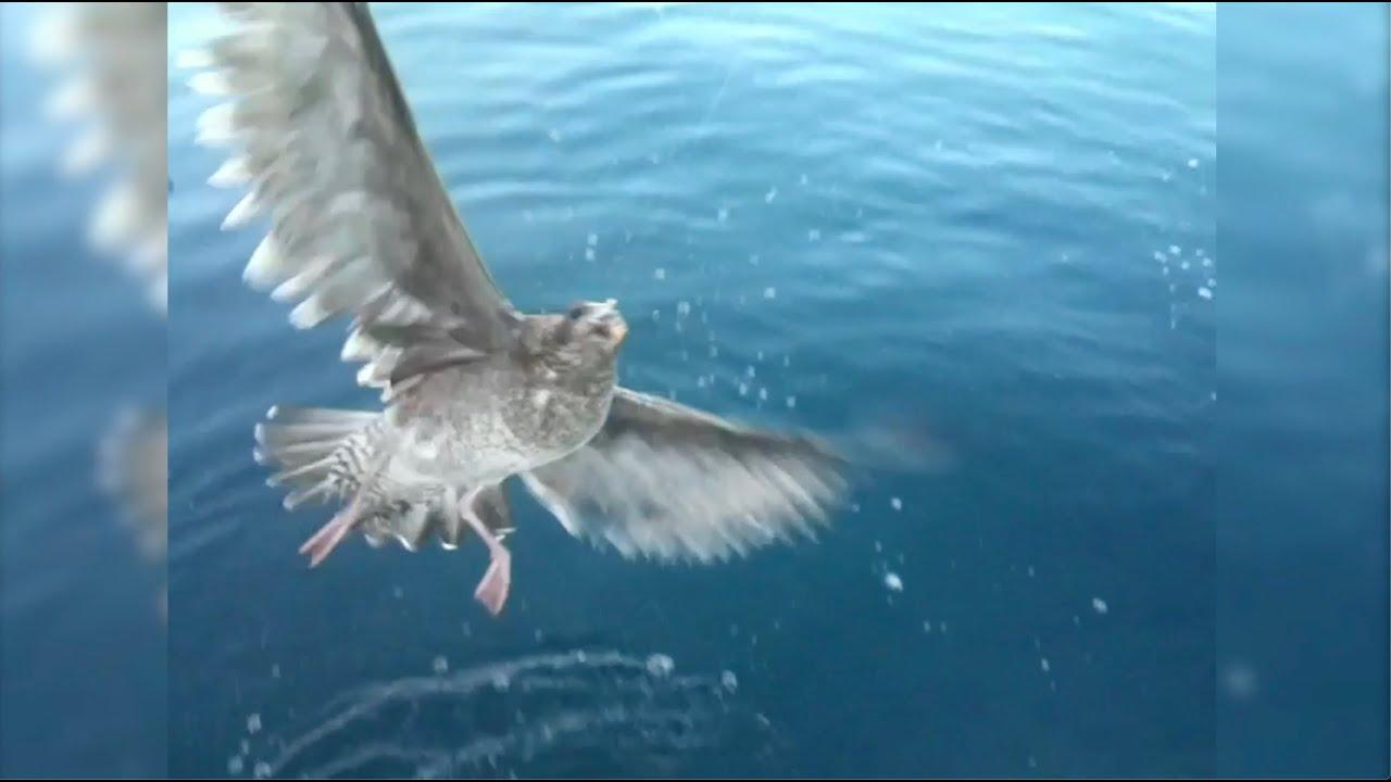 Câu Cá Dính chim.!!! Không Ai Làm Được Ngoài Bạn Tui... Ca Sĩ Trường Vũ.!!!