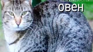 Какой тебе подходит кот? Узнай(это не точный тест, но многие коты совпадают) .