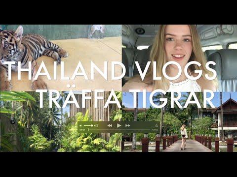 Thailand VLOG, TRÄFFA TIGRAR!! │ LOUISE JORGE