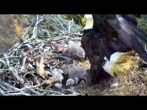 5.3 Earthquake at Sauces Eagles nest....