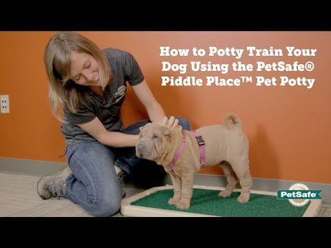 PetSafe—How To Potty Train Your Dog Using The PetSafe Piddle Place Pet Potty