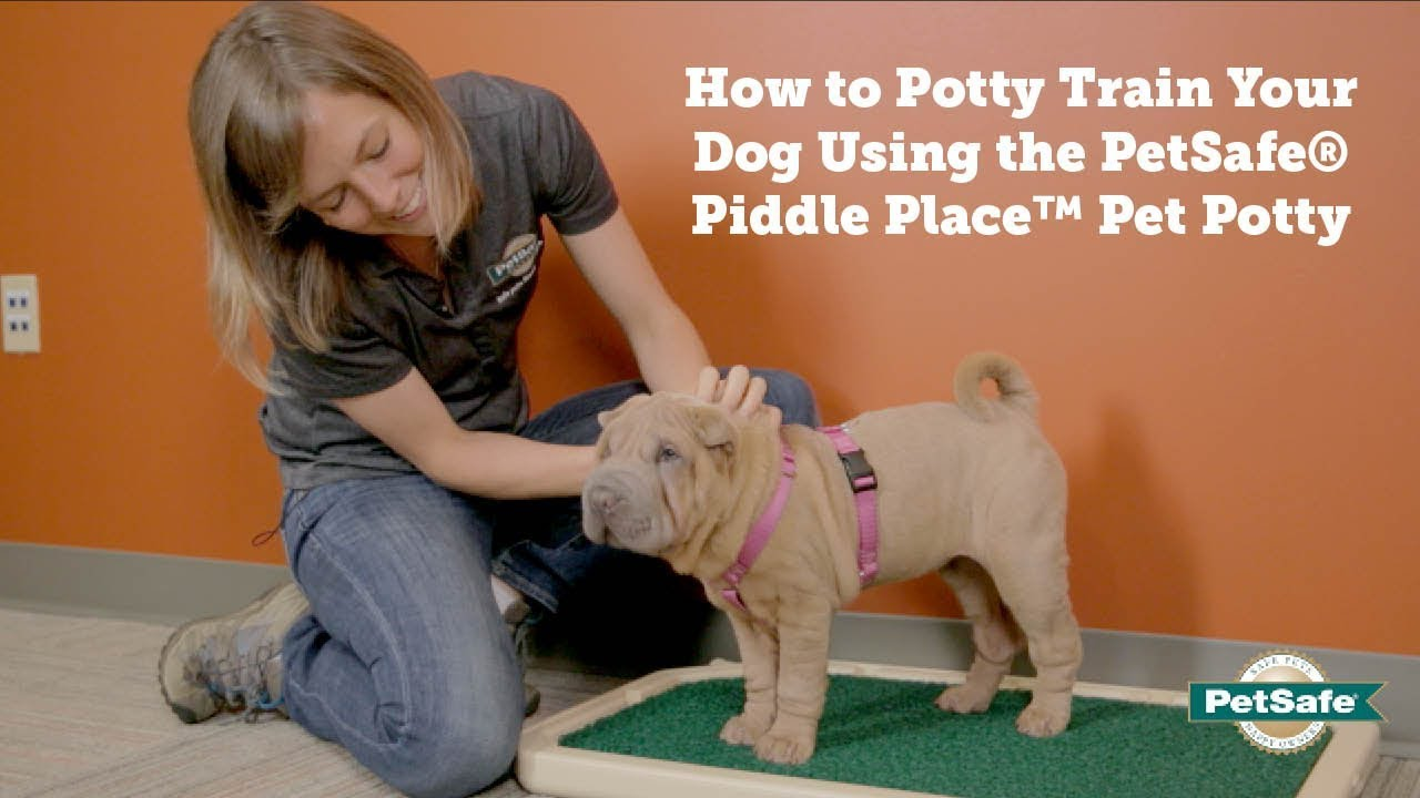 Petsafe How To Potty Train Your Dog Using The Piddle Place Pet