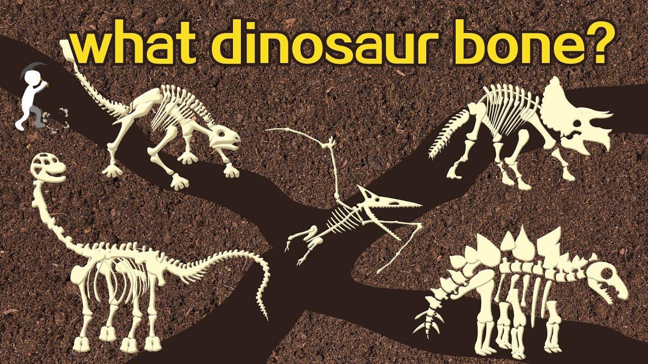 Dinosaur bone puzzle study | 猜恐龍 | 挖恐龍 | Carnivore? Herbivore? | 繪圖遊戲 | Dinosaur Jurassic World