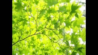 夏目漱石の「修善寺の大患」の時期を振り返って綴った有名な随筆の朗読...