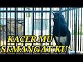 Masteran Kacer Gacor Buat Mancing Lawan  Mp3 - Mp4 Download