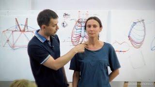 Александр Рыжкин об анатомии торса