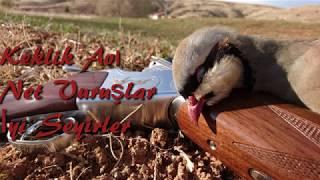 Keklik Avı Çok NET Vuruşlar-Partridge Hunting