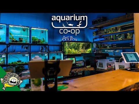 Aquarium Shop Tour And Warehouse Tour