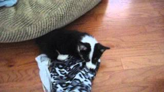 Einstein Playing With Blanket