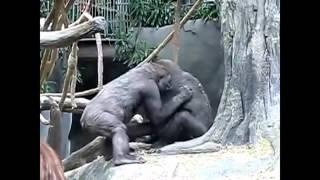 Приколы №2 Про обезьян