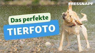 10 Tipps für das perfekte Tierfoto  Tutorial zur TierFotografie