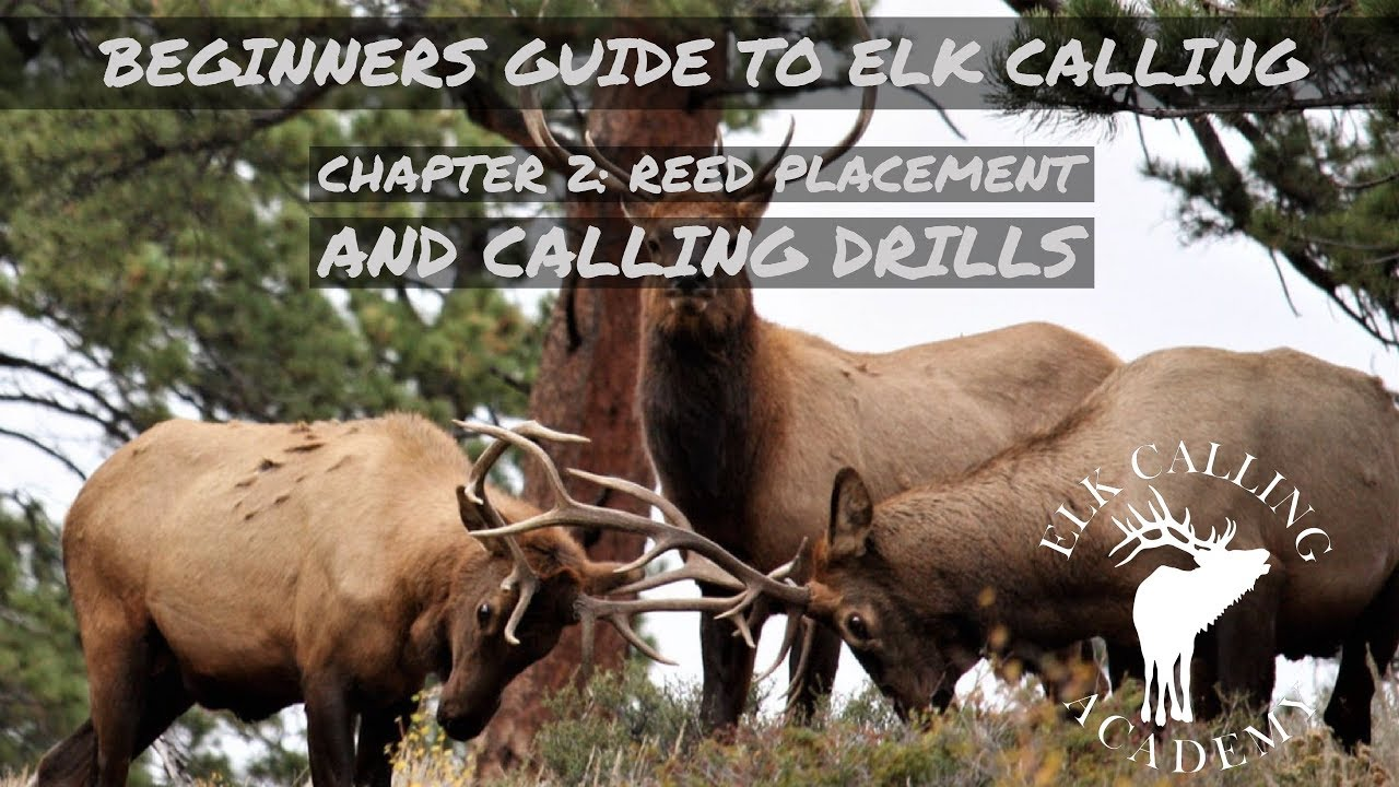 Beginners Guide To Elk Calling Chapter 2 Making Cow Sounds Youtube Simply push for the most realistic cow elk sounds. beginners guide to elk calling chapter 2 making cow sounds