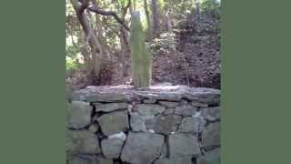 平戸・松浦家 第24代 松浦興信(まつら おきのぶ)公の墓