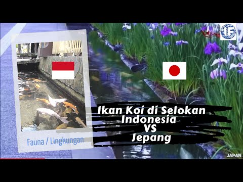 Image Result For Indonesia Vs Jepang