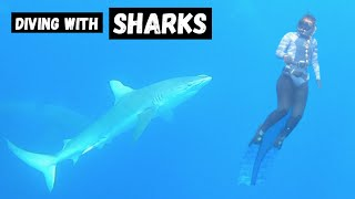Swimming with SHARKS in HAWAII (No Cage) - Was it worth It?