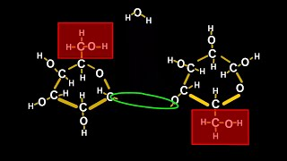 Chemistry Tutorial on Chemical Reactions: How Plants Make Cellulose